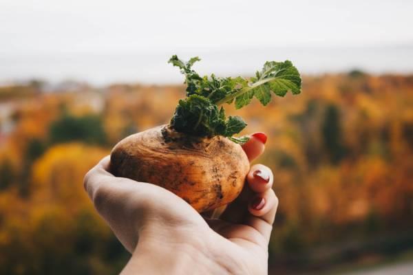 Comment conserver naturellement ses légumes en hiver ?